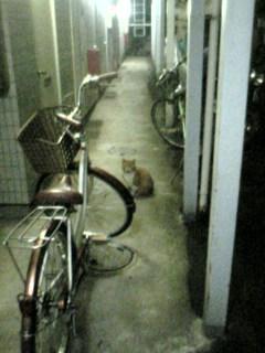 アパートにいた猫