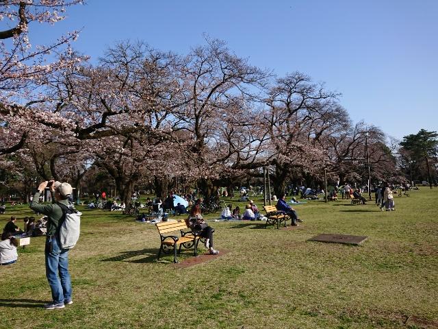 小金井公園の花見エリア1