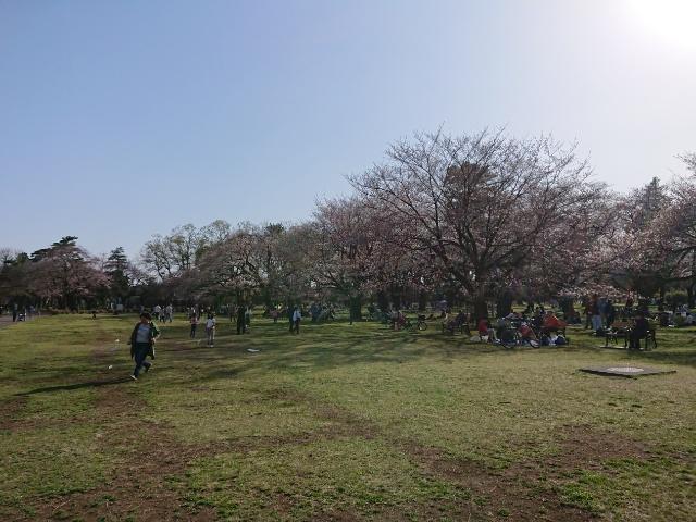 小金井公園の花見エリア2