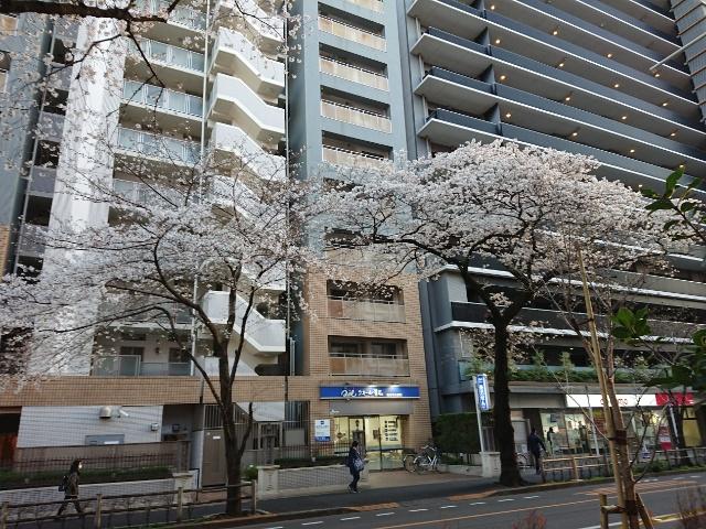 武蔵境の桜